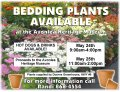 Bedding Plant Sale